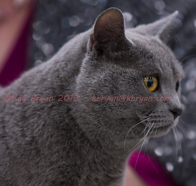 CatShow2014105_1.jpg