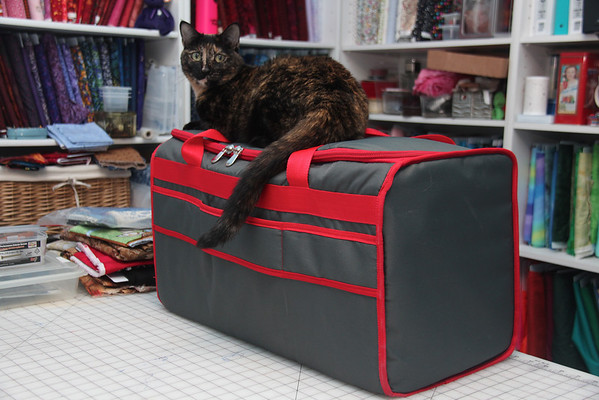 6.22.12 Rhea The Sewing Cat