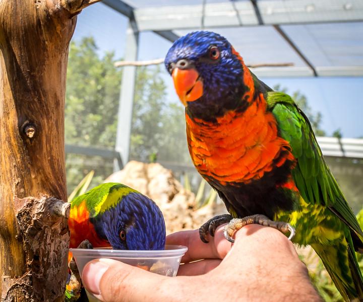 Feeding the birds in Paphos Zoo