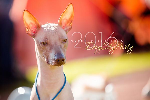 DogCityParty 16.07.2016