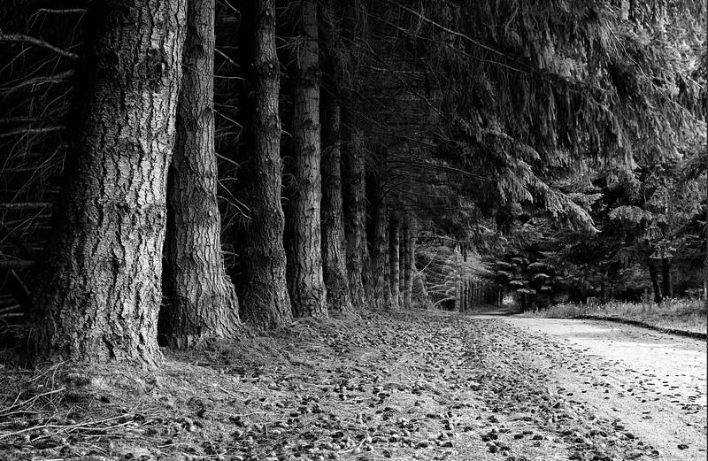 Bosque en Villa la Angostura - Patagonia - Argentina