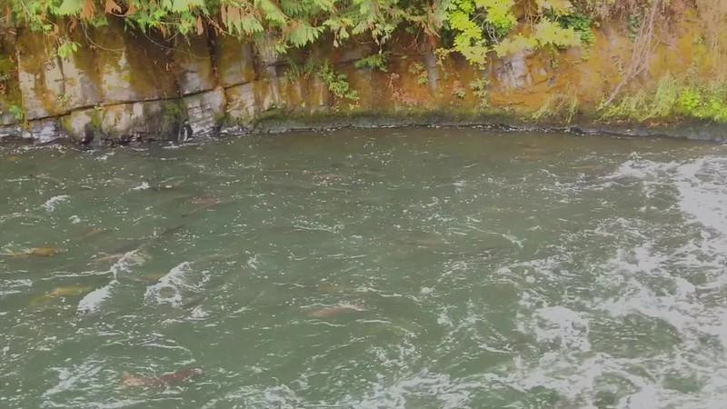 Salmon - Meditation