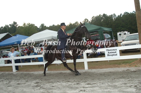 CLASS 13  TWO YEAR OLD MARES & GELDINGS