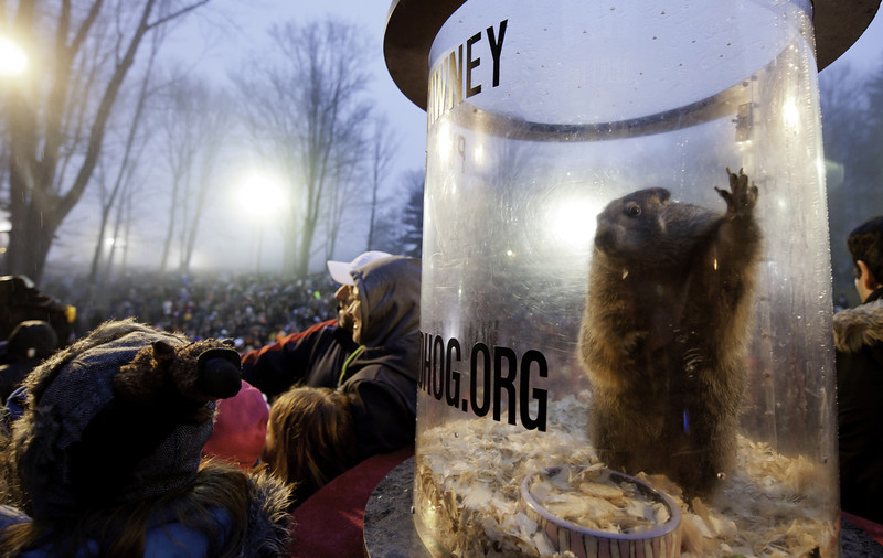 . Punxsutawney Phil relaxes in his cage after he saw his shadow predicting six more weeks of winter during 128th annual Groundhog Day festivities on February 2, 2014 in Punxsutawney, Pennsylvania. (Photo by Jeff Swensen/Getty Images)