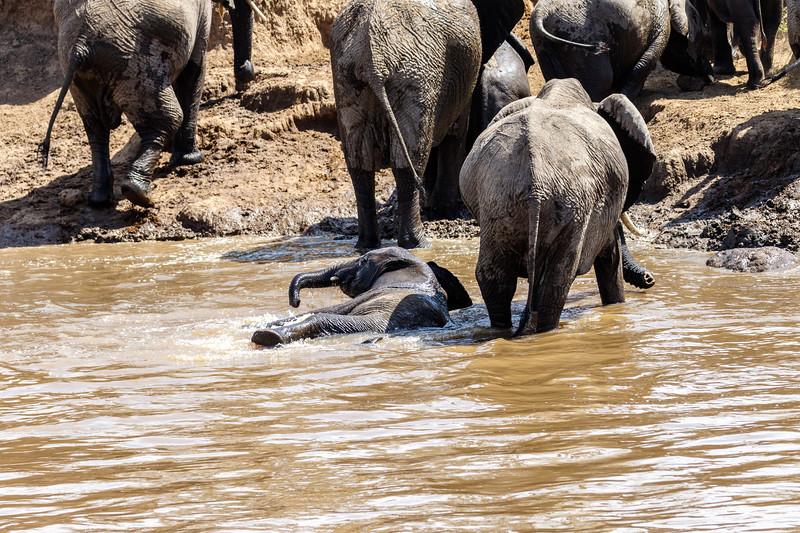 Kenya 2015-03850.jpg