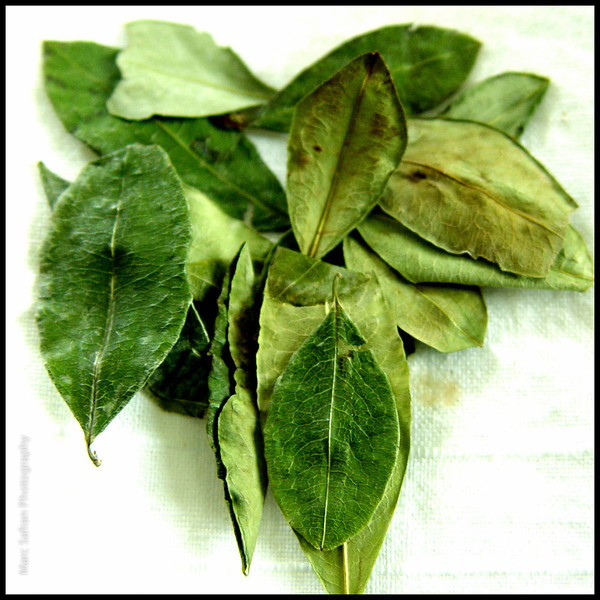 Bol_Coca_Leaves_copy.jpg