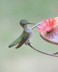 Hummingbirds, Butterflys and Bees