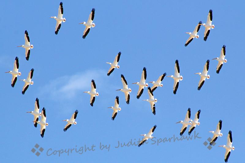 Big Flight - Judith Sparhawk