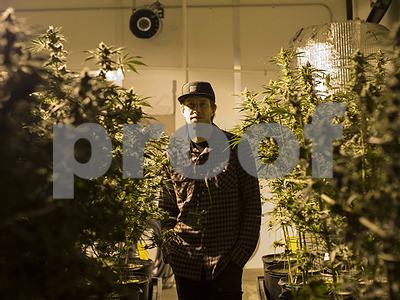 as-legal-marijuana-prices-drop-growers-are-scrambling-to-cut-production-expenses