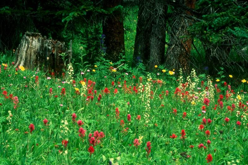 amh FLOWERS (1217).jpg