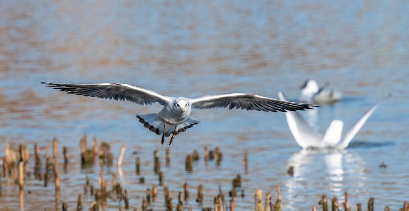 Gull - Final Approach-53.jpg
