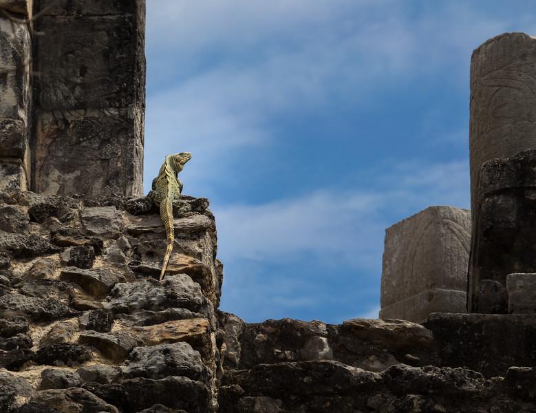 Iguana Warrior