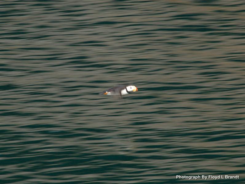 Alaska Kenai Fjords0096.JPG
