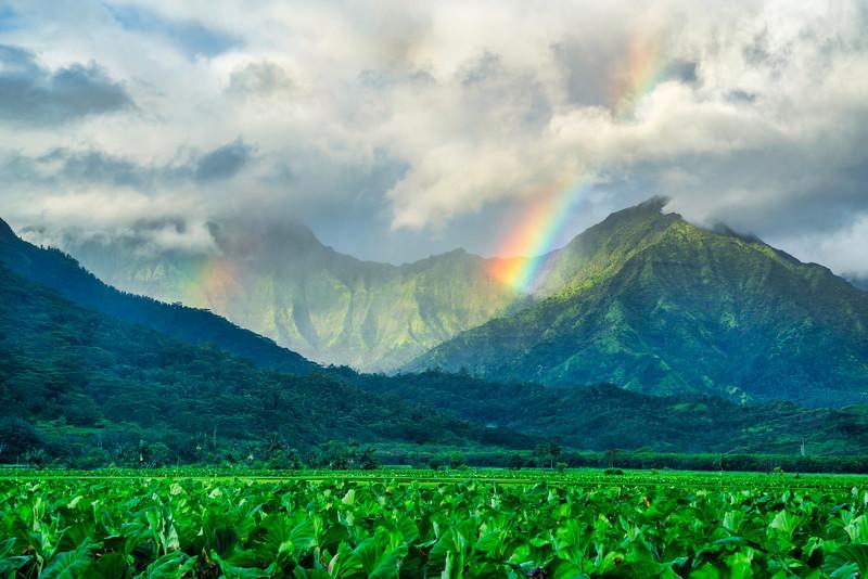Double Rainbow Over Taro Field