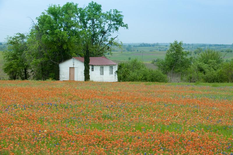 2015_4_3 Texas Wildflowers-7707.jpg