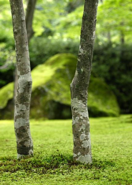 twins in moss.jpg