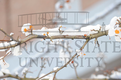 3784 Campus Snow Scenes 2-8-10