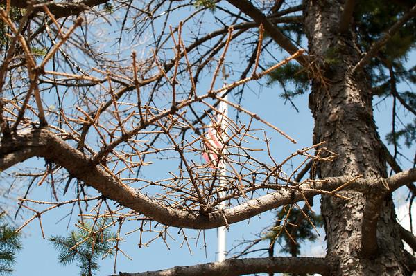 2013 05 01 Old Tree & Troop Meeting