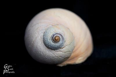 Seashell Photos
