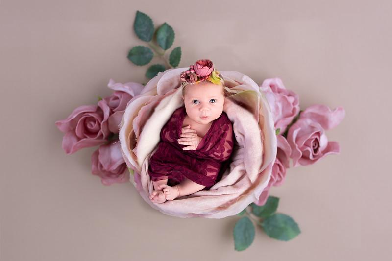 Eden Rose Newborn 2019