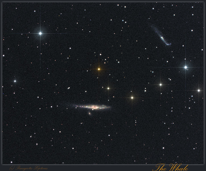 NGC4631 - Whale Galaxy.jpg