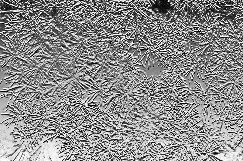 T - Spruce Needle Fireworks.jpg