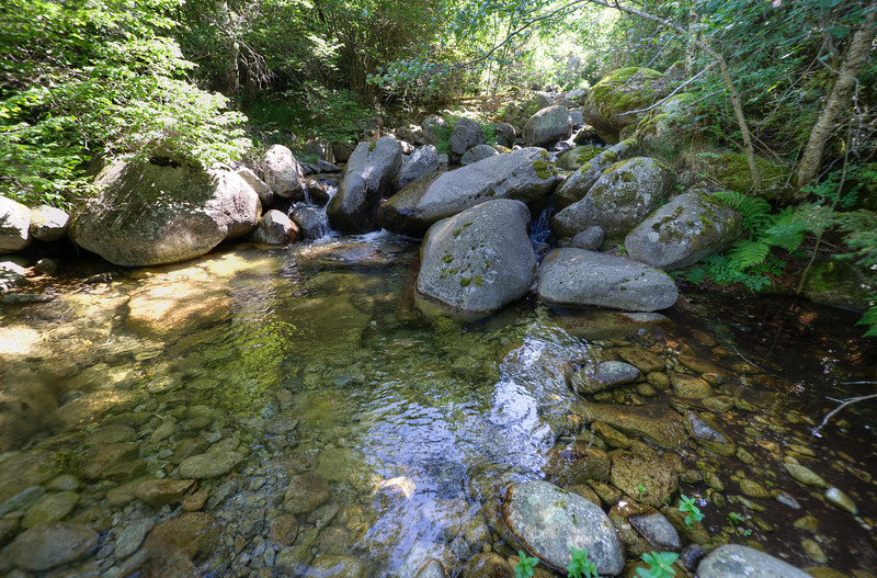 Small creek in the forest of Andorra