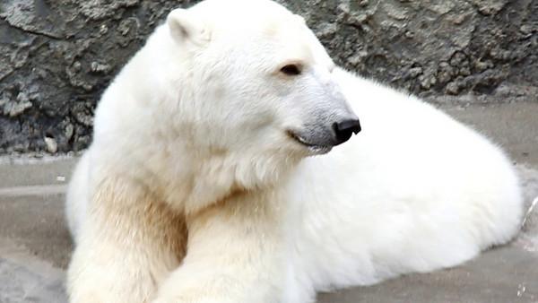 SFO Zoo Videos