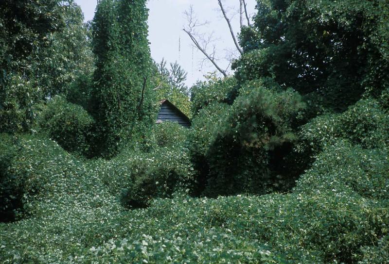 house on dawson forest rd.jpg