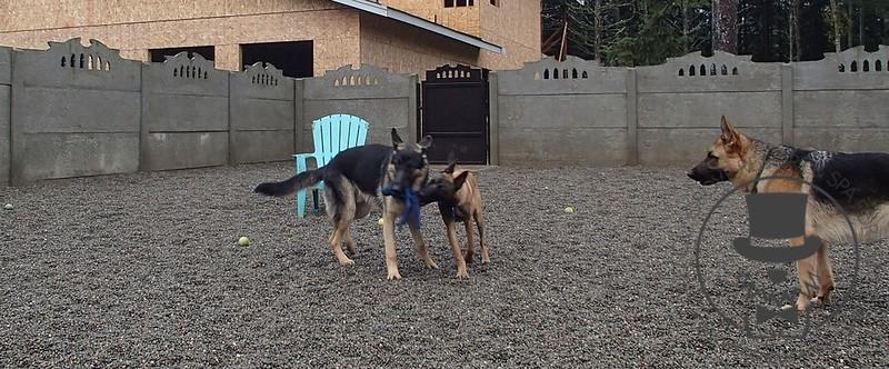 Doggy Daycare - September 2013