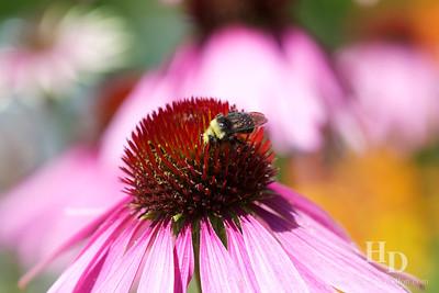 2012-08 Seattle Botanical Garden