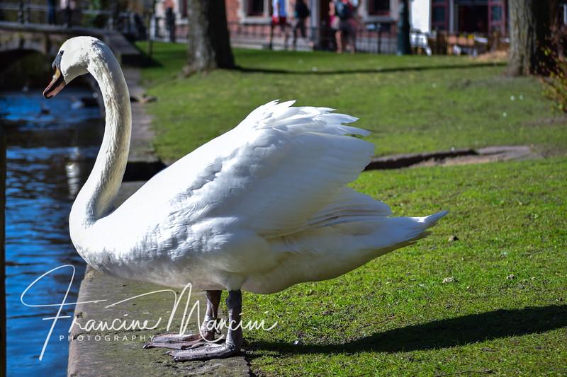 Bruges (677 of 1022).jpg