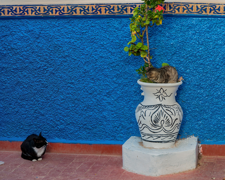 U2117 Rabat Cats 2.jpg