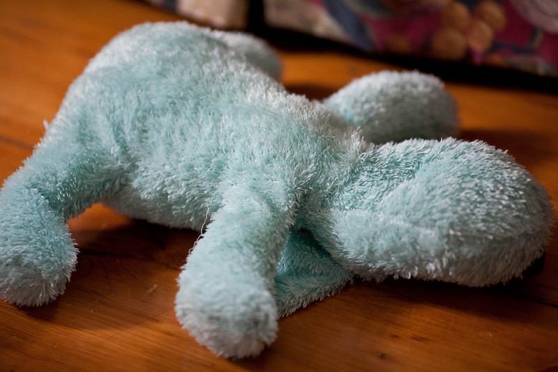 Molly's Toy