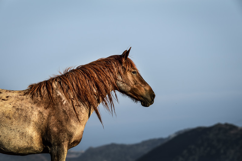 Return to Freedom - Wild Horse Sanctuary, Lompoc CA