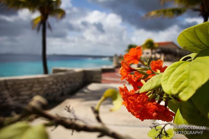 Bonaire-photography (5).jpg