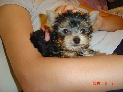 When I was just a tiny puppy DONE