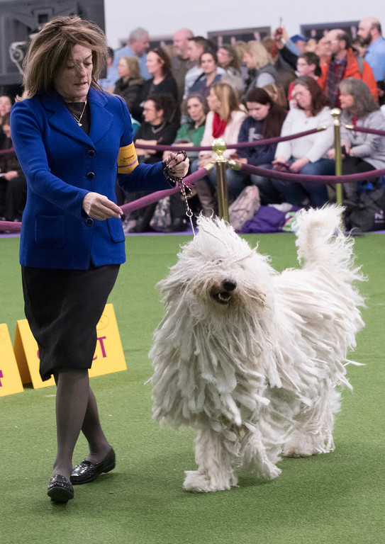 . Nina Fetter present Betty Boop, a Komondor, in the ring during the 141st Westminster Kennel Club Dog Show, Tuesday, Feb. 14, 2017, in New York. (AP Photo/Mary Altaffer)