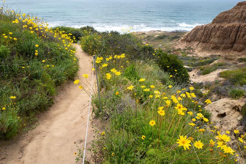 Spring Flowers A-347.jpg