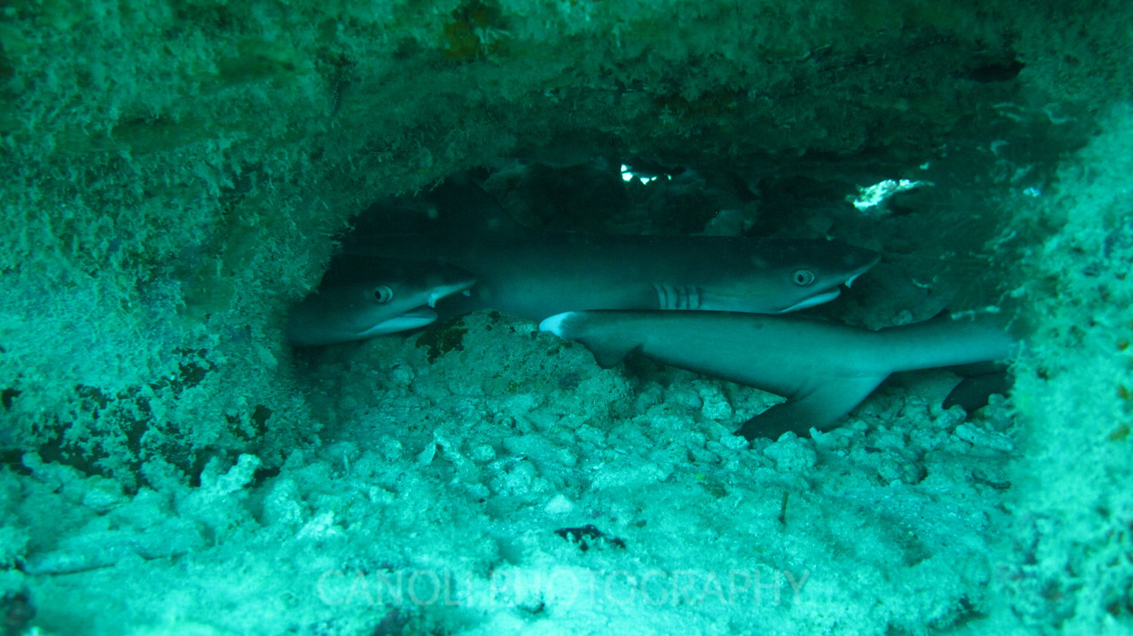 3 sharks trying to take a nap under a rock