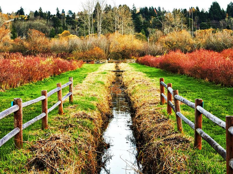bellevue-park-bellevue-park-IMG_1402_.jpg