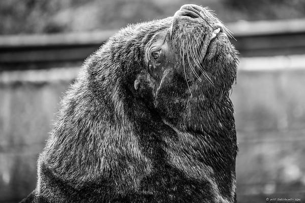 Cornish Seal Sanctuary - Gweek - 11th August 2015