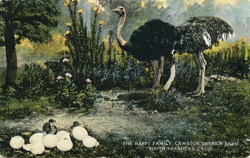 Ostrich Farm Family