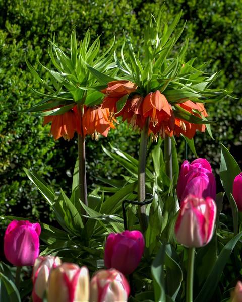 Garden 1, 028.jpg