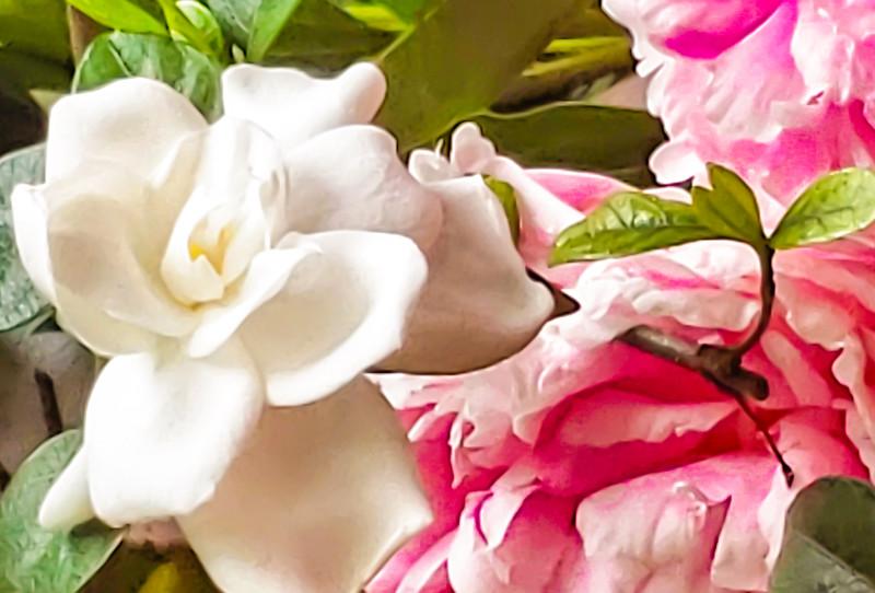 Gardenia and Peonies.jpg