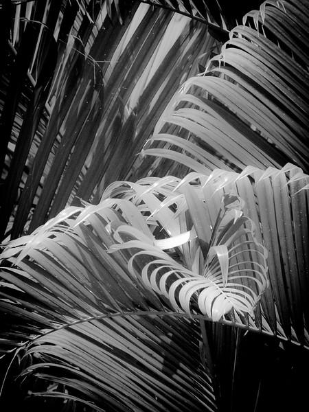 13 Palms - No. 3