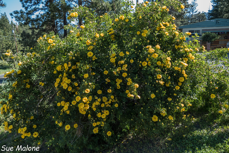 Flowers at Old Fort Road-6.jpg