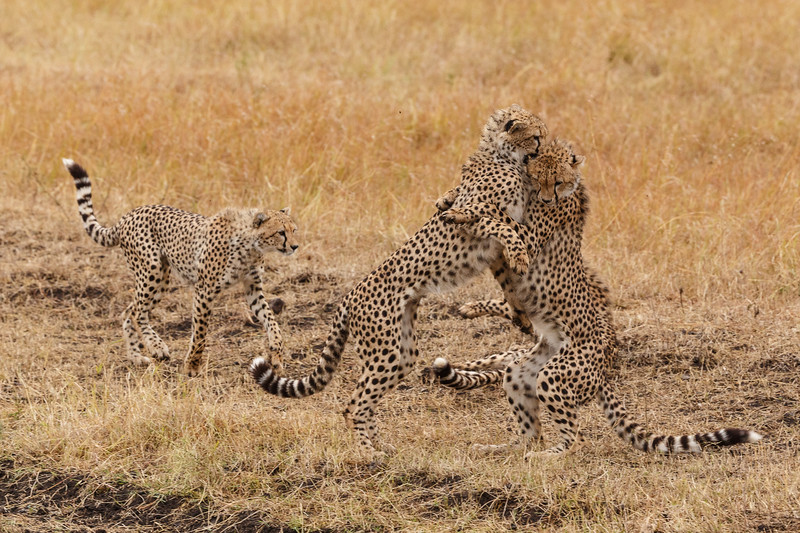 Kenya 2015-07747.jpg