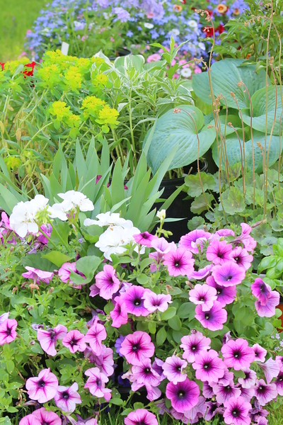 Woodstock Garden Club Plant Sale, 2016