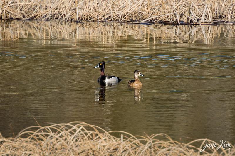 2020-05-12_Potter Marsh bird-_6109338-2-Juno Kim.jpg
